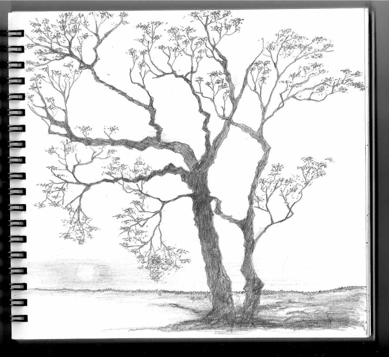 1295x1187 Sketch Spring Season Pencil Drawing For Of Repke Art Repke Spring