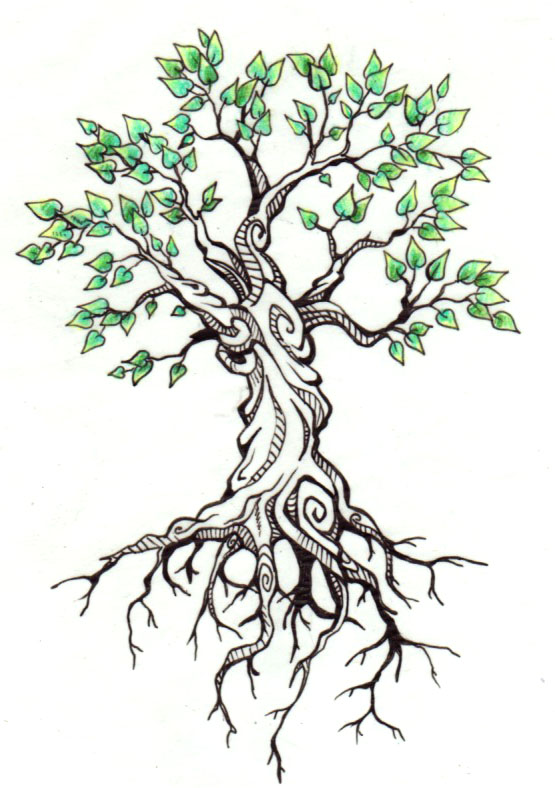 555x788 Black And White Oak Tree Drawing Black And White Oak Tree. Tree