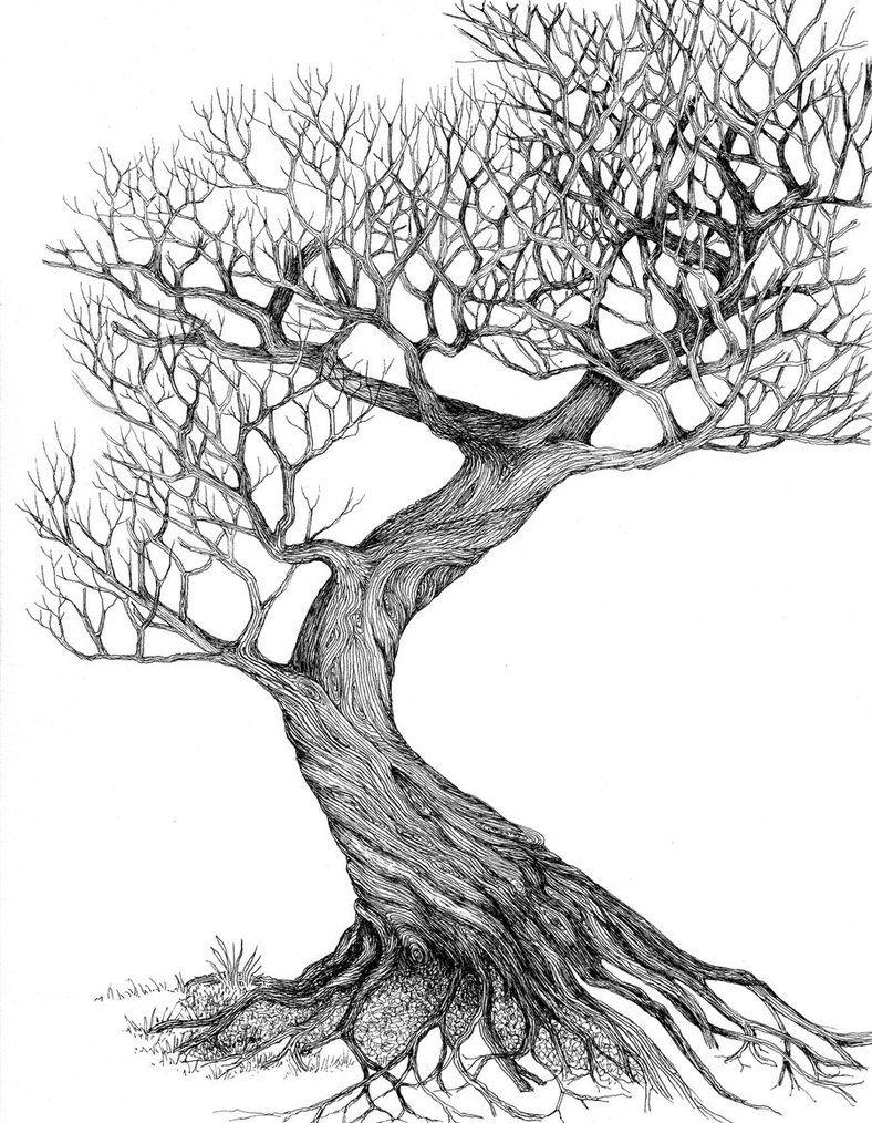 788x1014 Line Drawing Leaves Twisting Tree By Ellfi