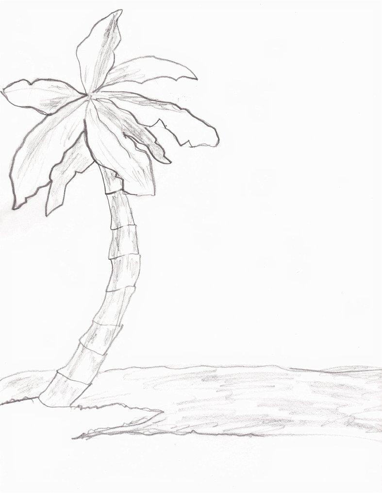 787x1015 Palm Tree By Joeactor