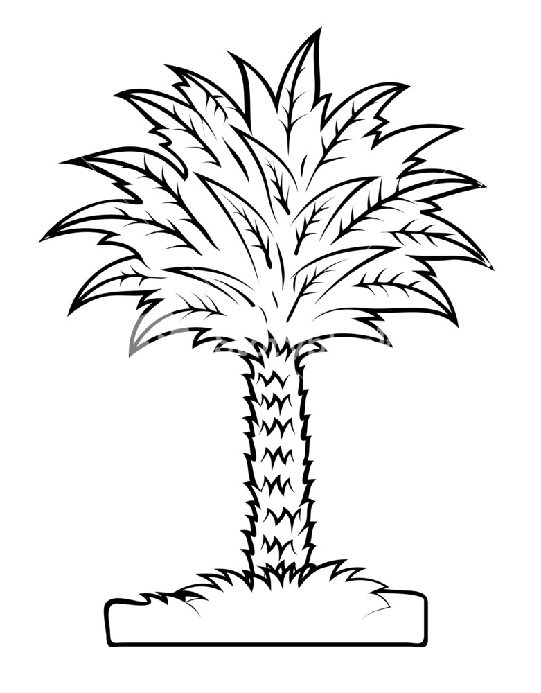 781x1000 Vector Drawing Of Palm Tree Royalty Free Stock Image