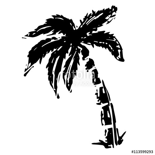 500x500 Coconut Palm Tree Black Sketch Drawing Stock Image And Royalty