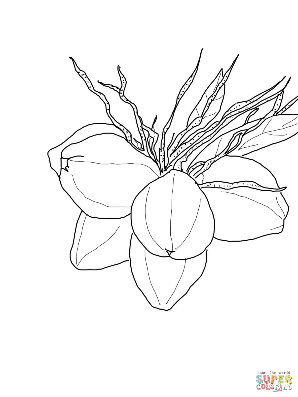1200x1600 Coconuts On Palm Coloring Page Free Printable Coloring Pages