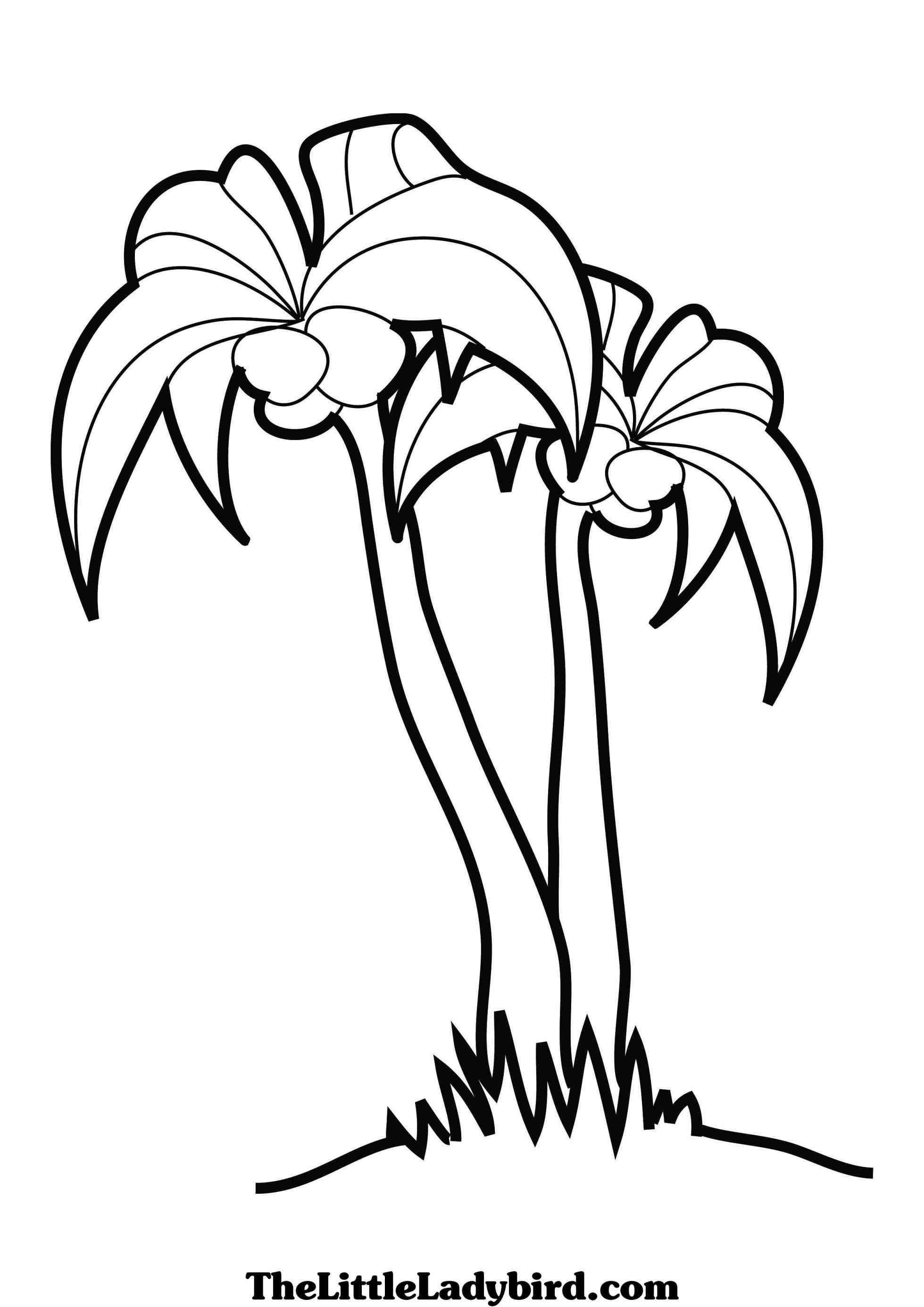 Palmetto Tree Drawing at GetDrawings | Free download