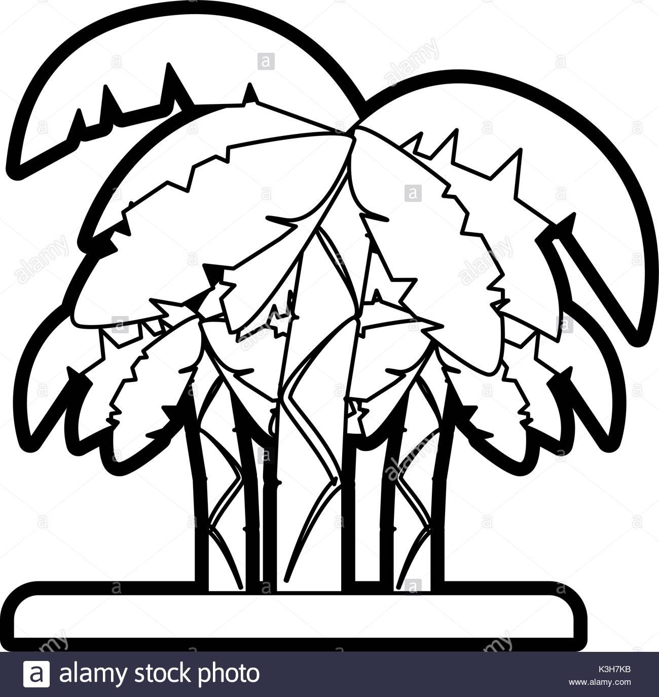 1300x1374 Palm Tree Illustration Black And White Stock Photos Amp Images