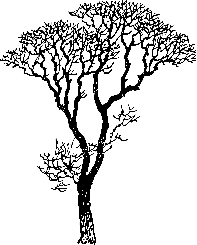 1969x2448 Palmetto Tree Clipart