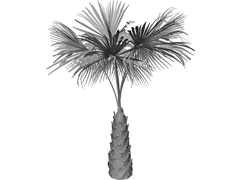 800x600 Palmetto Tree Outline
