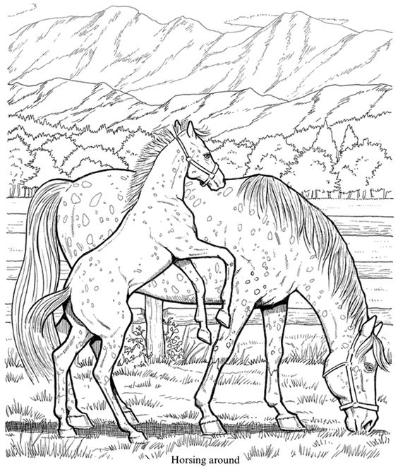 564x661 Welcome To Dover Publications Wonderful World Of Horses Coloring