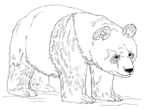 480x363 Giant Panda Bear Coloring Page Free Printable Coloring Pages