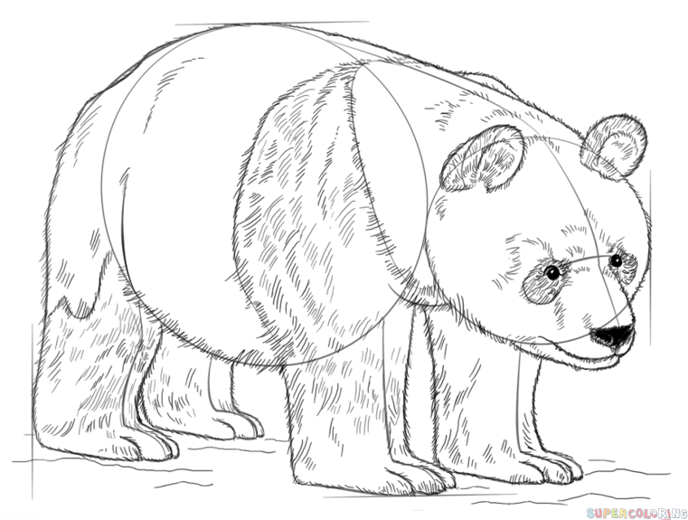 761x575 How To Draw A Giant Panda Step By Step Drawing Tutorials