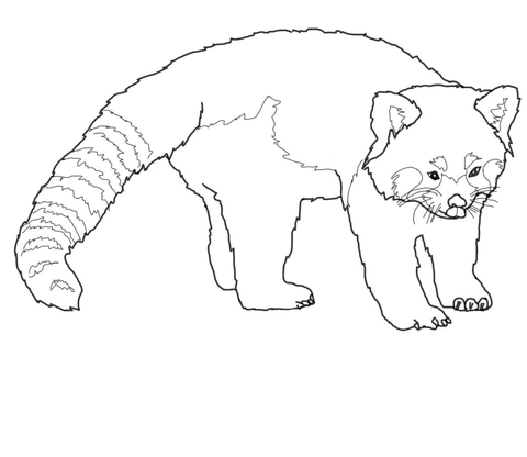 480x416 Cute Red Panda Coloring Page Free Printable Coloring Pages