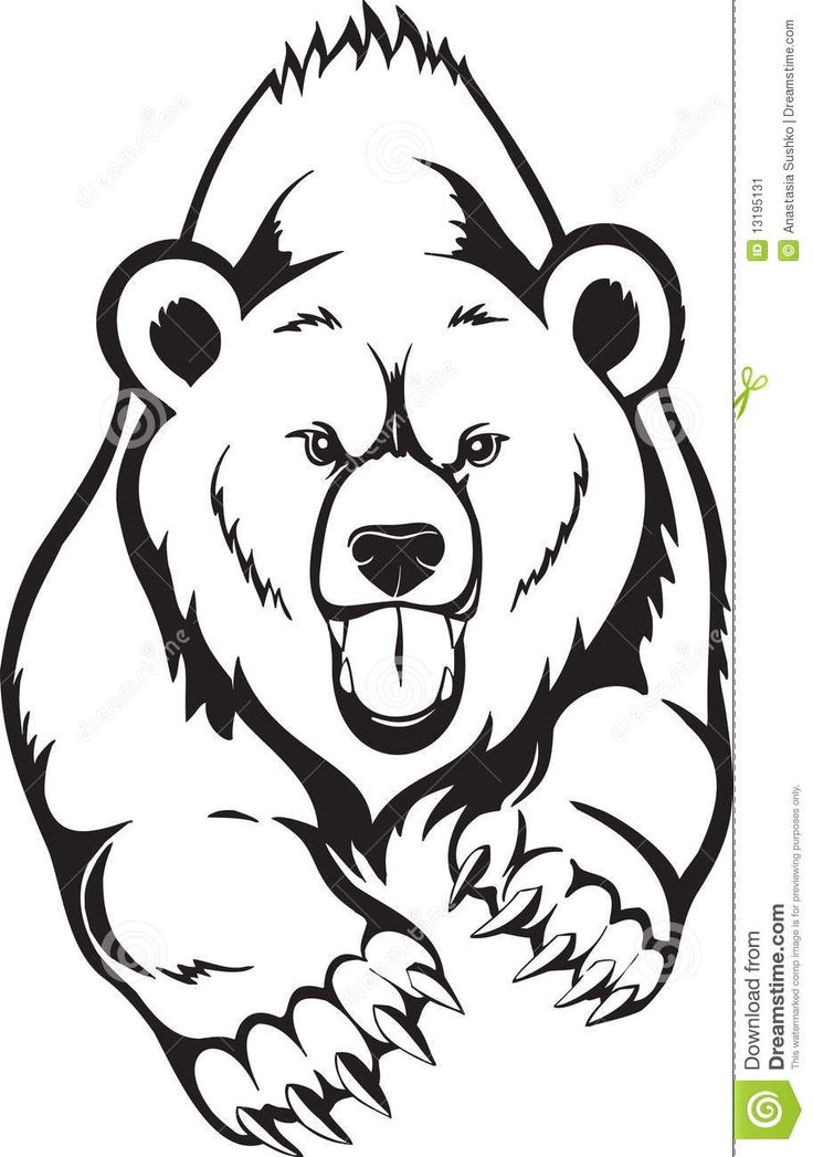 736x1047 Agreeable Pictures Of Bears To Draw How Grizzly Panda And Ice Bear