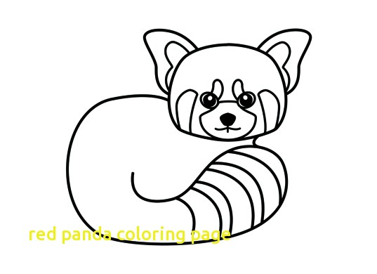 537x390 Red Panda Coloring Page With Drawn Red Panda Sheet Pencil And