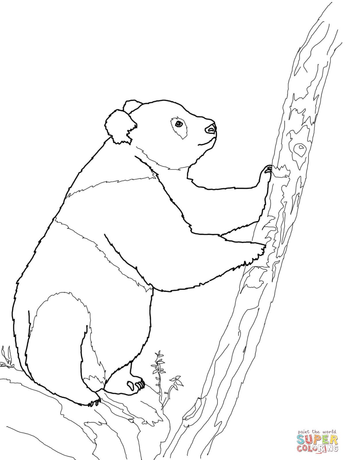 Panda Eating Bamboo Drawing at