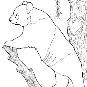 300x300 Panda Eat A Lot Of Bamboo Coloring Page Panda Eat A Lot Of Bamboo