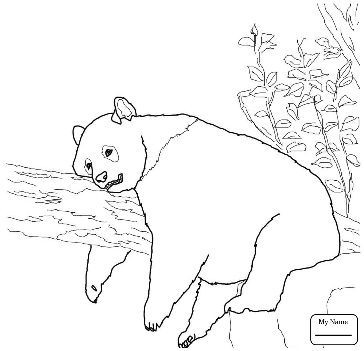 1224x1183 Coloring Pages For Kids Giant Panda Giant Panda Eats Bamboo