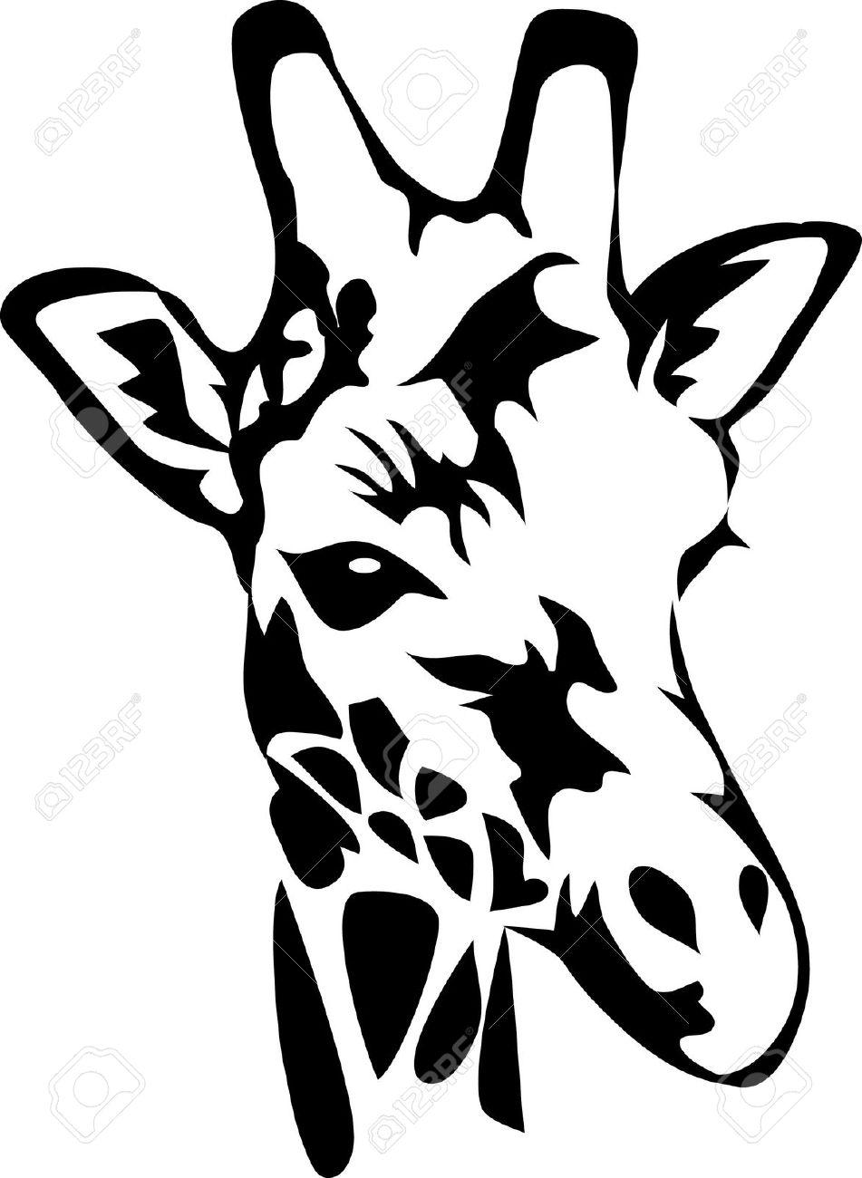 951x1300 Giraffe Face Clipart Collection