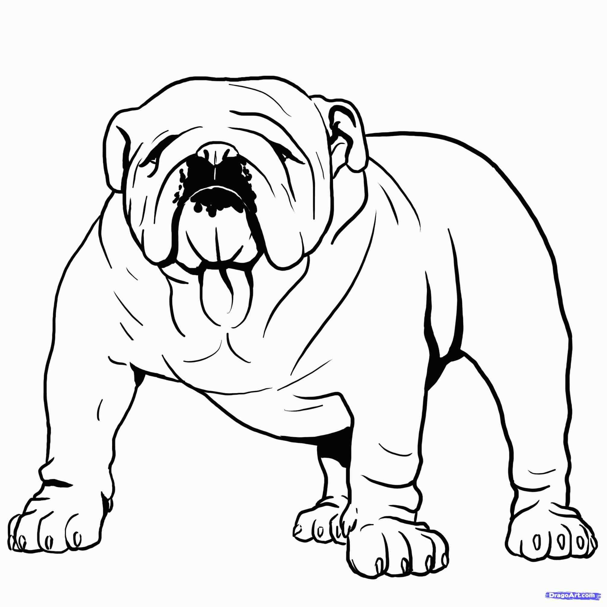 2014x2014 English Bulldog Face Drawing