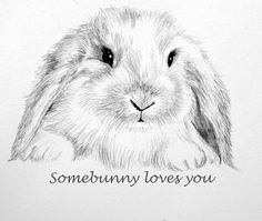 236x199 Holland Lop Realistic Pencil Drawings, Drawings And Explore