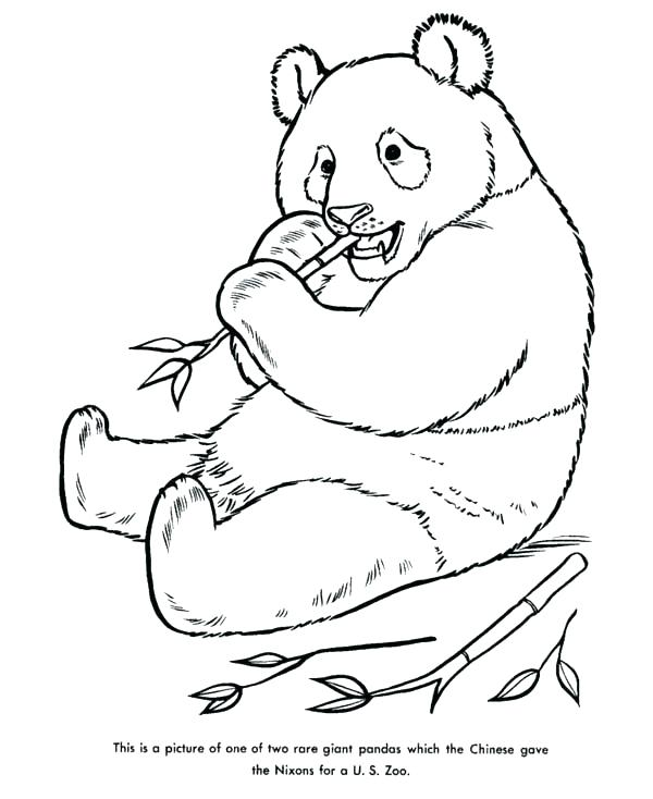 Panda With Bamboo Drawing At Getdrawings Com Free For Personal Use