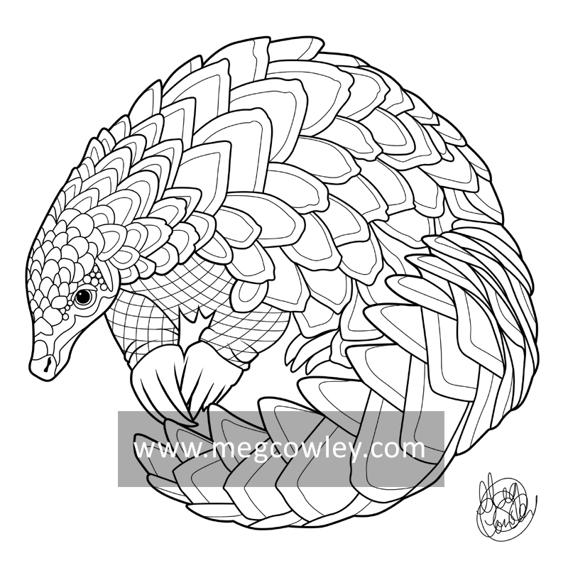 800x800 Pangolin (The Exotic Colouring Book) By Megcowley