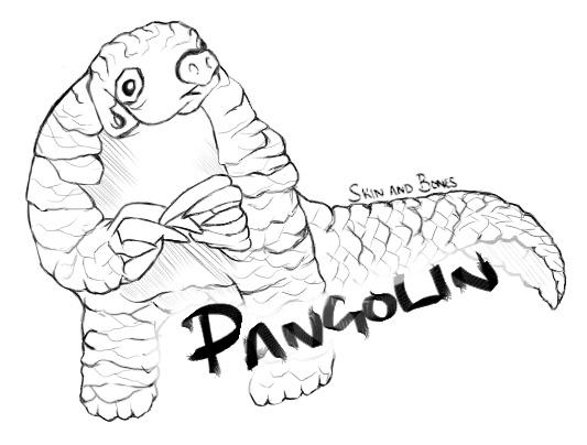 533x404 Pangolin Skin And Bones