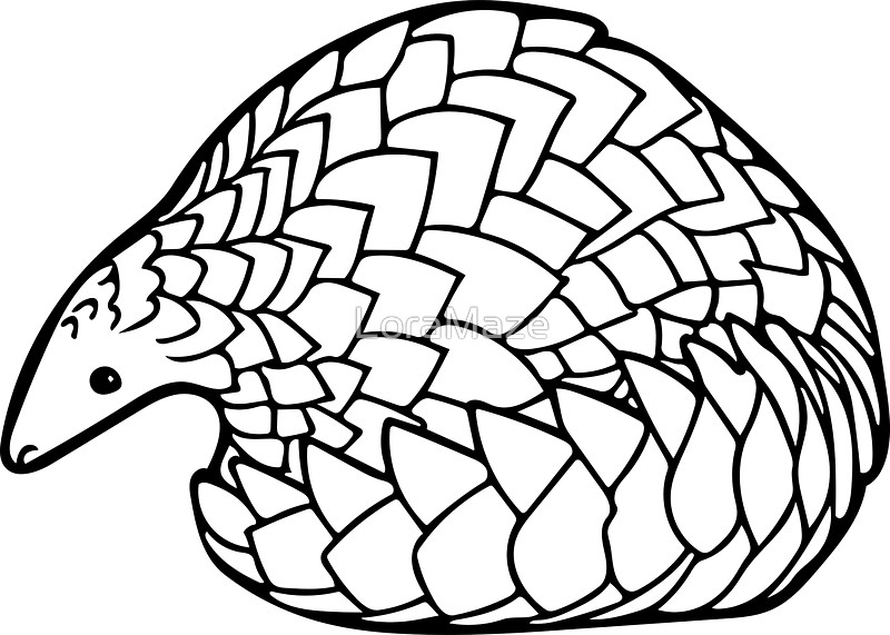 800x571 Save The Pangolins Stickers By Loramaze Redbubble