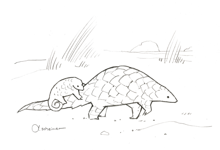 750x511 Studio Tuesday Blog Drawings And Animal