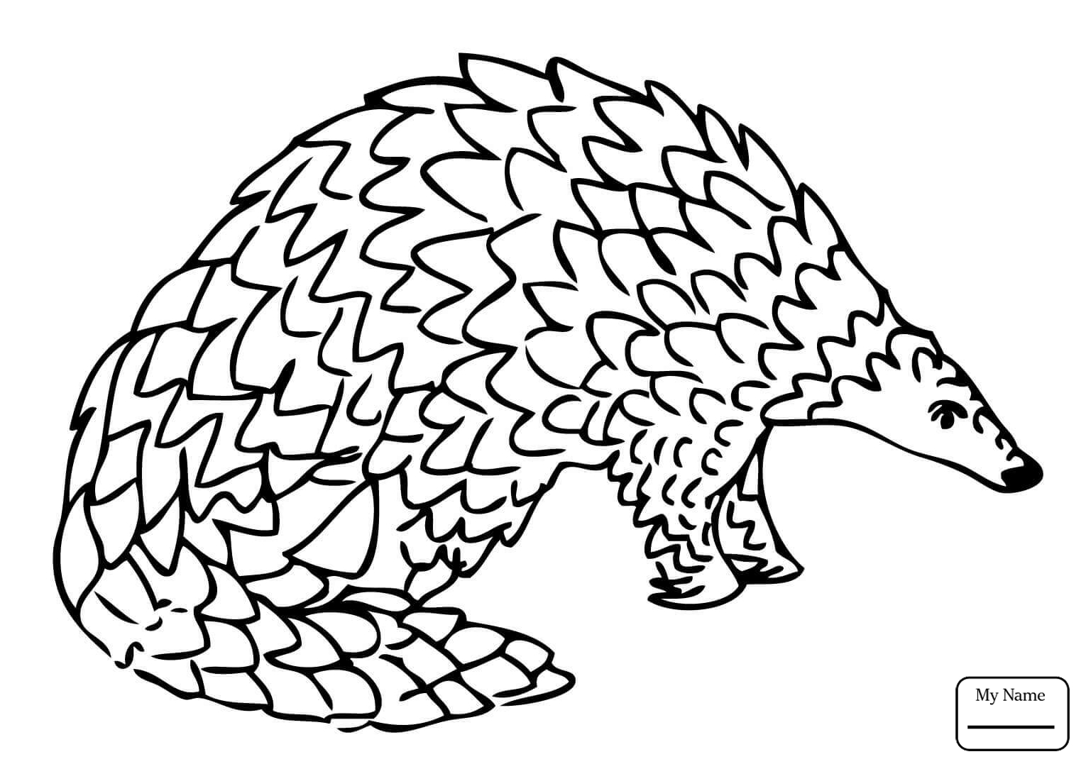 1530x1077 Coloring Pages Mammals Giant Pangolin