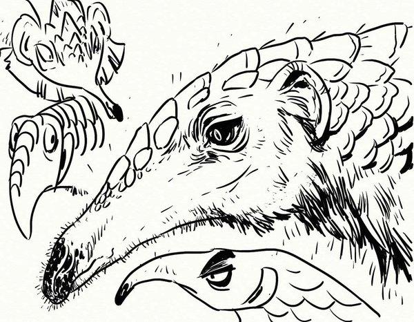 600x466 Pangolin Sketches 2 By Goosezilla