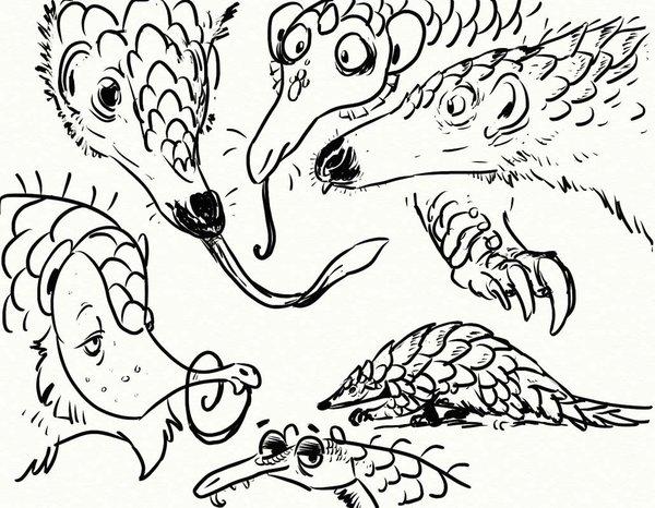 600x466 Pangolin Sketches By Goosezilla Pangolin