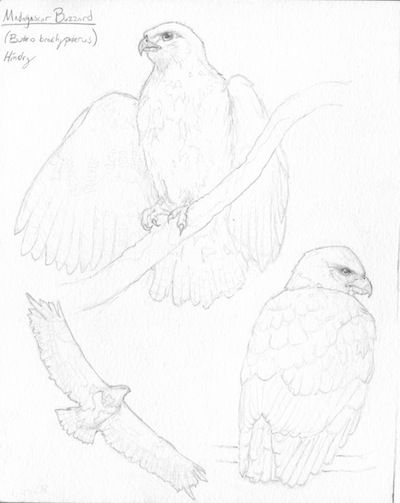 400x503 Field Sketches