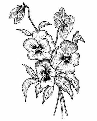 Pansy Drawing