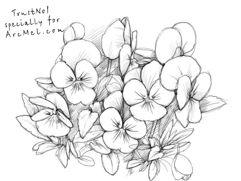 768x576 How To Draw Pansies Step By Step