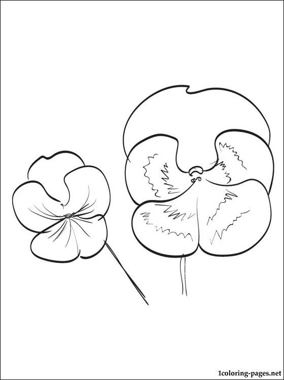560x750 Pansy Thought Coloring Page Pansy Drawing