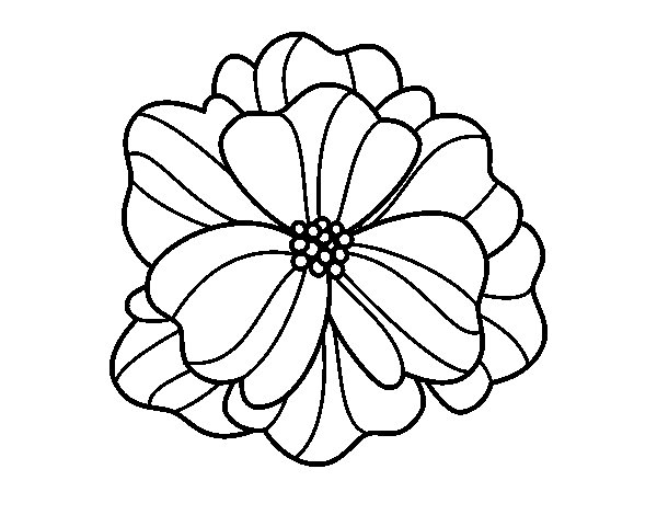 600x470 Pansy Coloring Page