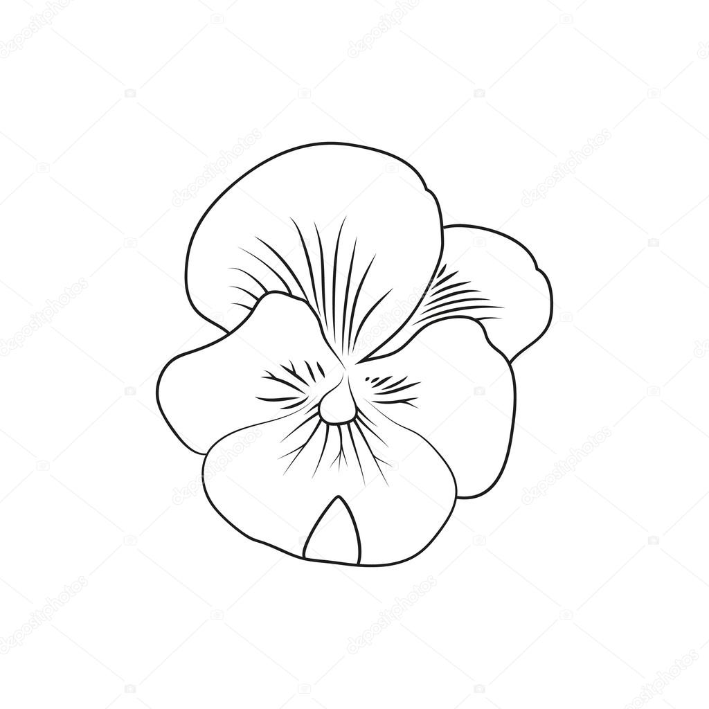 1024x1024 Pansy Flower Simple Black Lined Icon On White Background Stock
