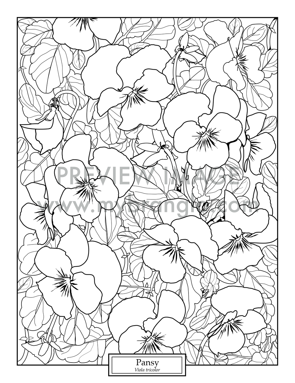 1000x1294 Botanical Coloring Page Pansy Branglo