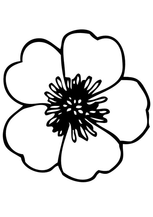 531x750 Coloring Page Pansy