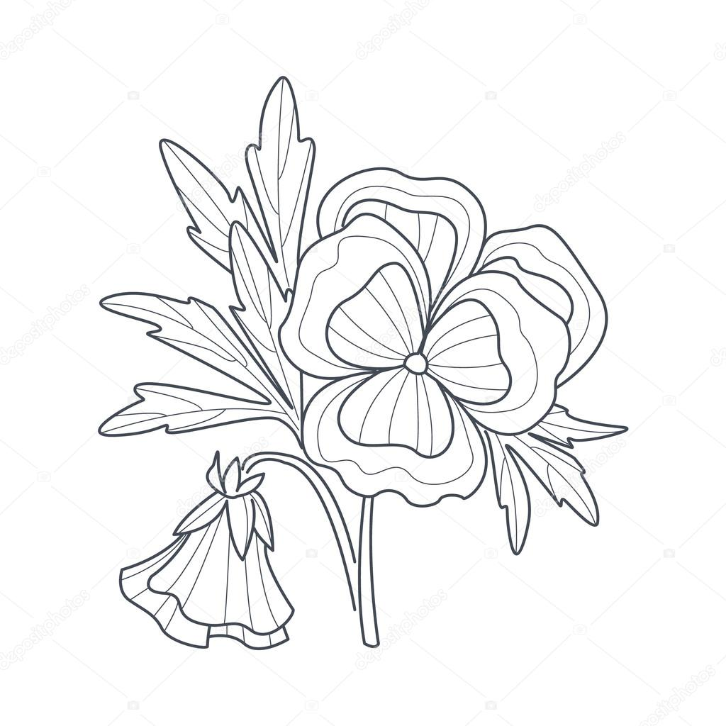 1024x1024 Pansy Flower Monochrome Drawing For Coloring Book Stock Vector
