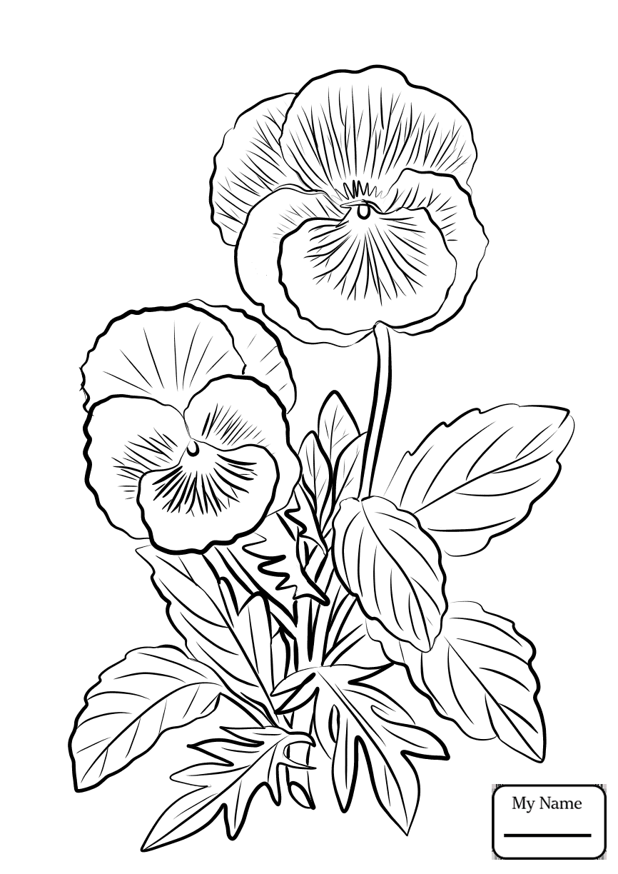 866x1224 Coloring Pages For Kids Flowers Garden Pansy Pansy