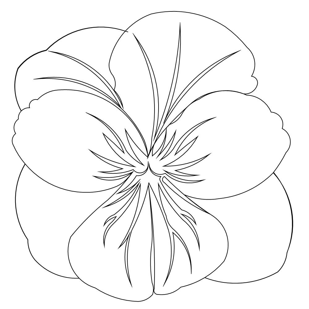 Pansy Line Drawing at GetDrawings