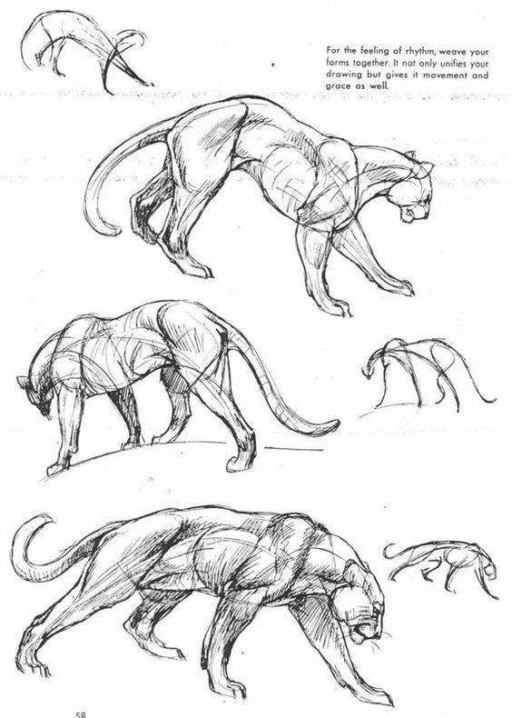 564x790 How To Draw Panther.