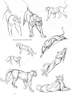 236x308 Panther Drawings Sketches