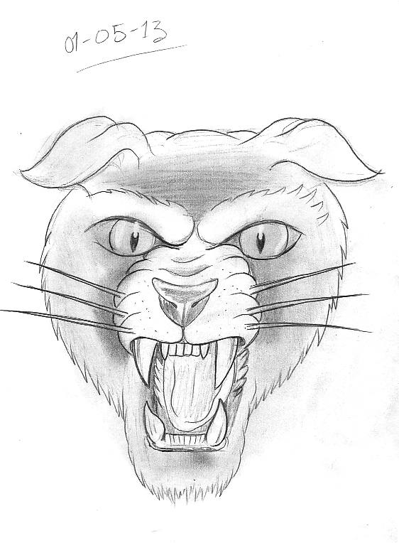 562x764 Tattoo Sketch A Day Cats May 1st