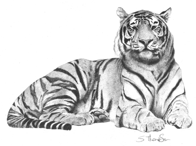 400x297 Julie Rhodes, Original Wildlife Art, Wildlife Pencil Drawings