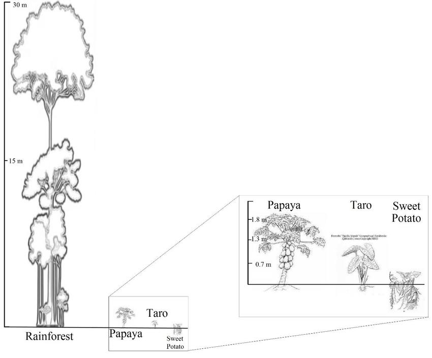 850x705 Heights And Structure Of Each Canopy Condition Mature Forest