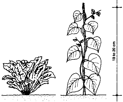 470x388 Plant The Food And Shelter Plants