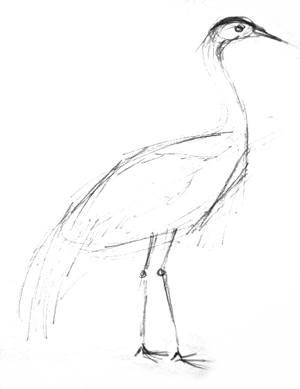 300x389 How To Draw A Crane Bird