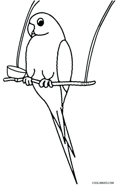 Parakeet Drawing